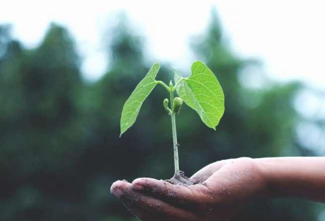 Formazione fertile: un atto che genera, costruisce e produce il cambiamento in azienda